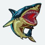 shark_03-1