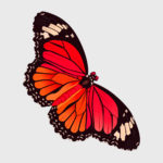 butterfly_vector